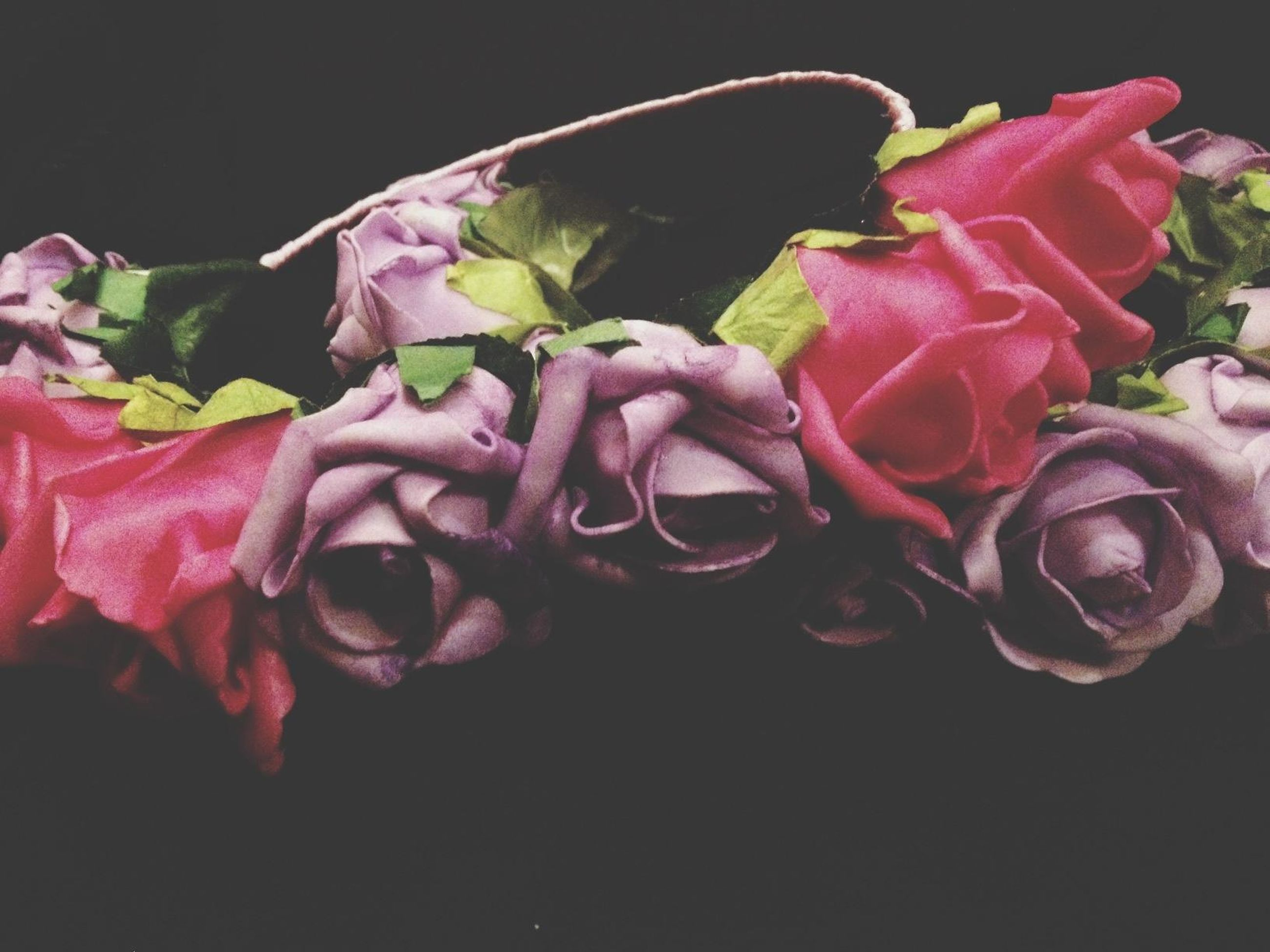flower, petal, freshness, fragility, pink color, close-up, studio shot, flower head, beauty in nature, black background, nature, rose - flower, plant, growth, water, no people, night, drop, purple, pink