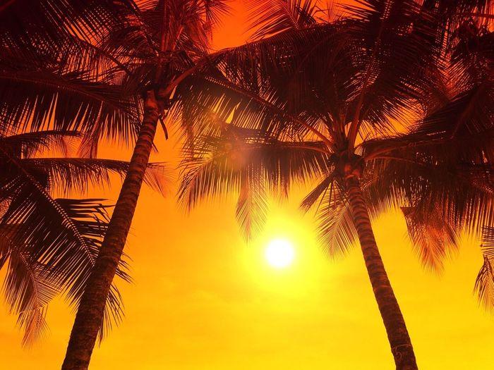 Landscape #sunset #sun #clouds #skylovers #sky #nature #beautifulinnature #naturalbeauty #photography #landscape Gang_family EyeEm Best Shots
