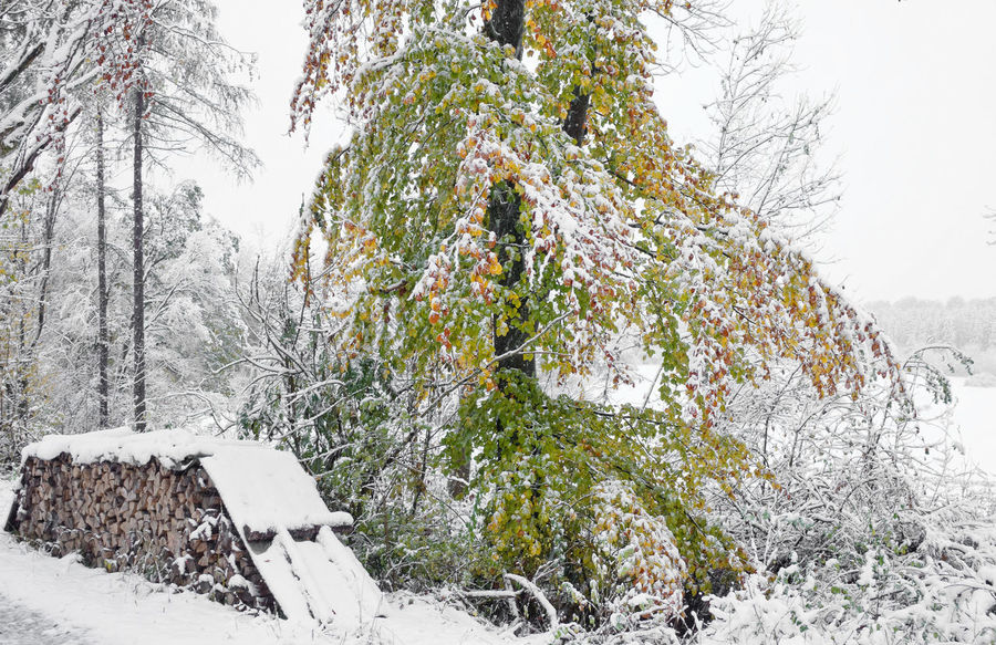 Snow Winter Cold Temperature Tree Plant Nature Beauty In Nature Covering Land No People Frozen Day White Color Tranquility Growth Field Non-urban Scene Outdoors Scenics - Nature Extreme Weather Snowing Coniferous Tree Landscape Landscape_Collection Landscape_photography