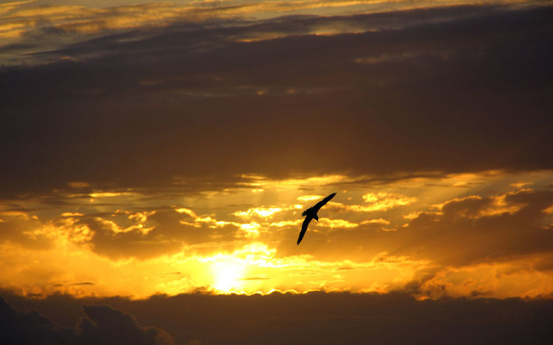 Bird Cielo Perendim Qiell Seagull Sky Sky And Clouds Sole Sun Sunset Sunset #sun #clouds #skylovers #sky #nature #beautifulinnature #naturalbeauty #photography #landscape Sunset_collection Tramonto Uccelli In Volo Zog