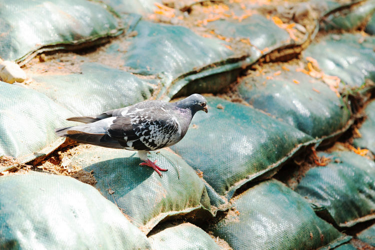 Close-up side view of a bird on sacks
