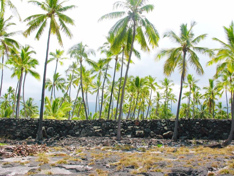 Big Island Hawaii No People Volcanic Stone Volcanic Landscape The KIOMI Colllection Showcase April Palm Trees Vibrant Colors Arid Landscape