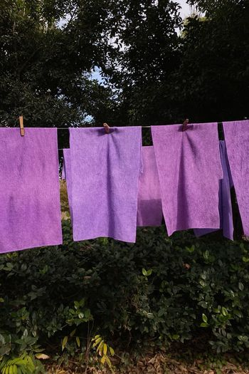 Low angle view of clothes drying against trees