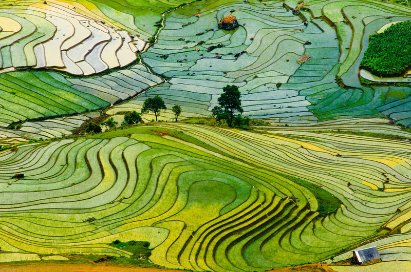 Beautiful terraced rice field in Sapa, Vietnam Agriculture Bali Farm Farmer Field Indochina Plant Rice Valley, Vietnam Vietnamese Countryside Ecology Environment Environtment Harvest Land Landscape Nature Sapa Vietnam Soil Terraced Transplant Travel,