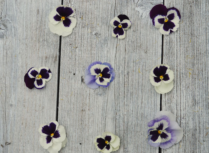 Wood Beauty In Nature Close-up Directly Above Flower Flower Head Flowering Plant Fragility Freshness Growth Home Interior Inflorescence Nature No People Outdoors Pansy Petal Plant Purple Purple Flower Still Life Summer Vulnerability  Wood Wood - Material