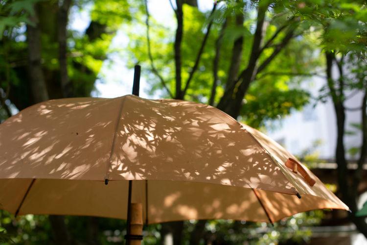 Close-up of wet umbrella against trees during rainy season