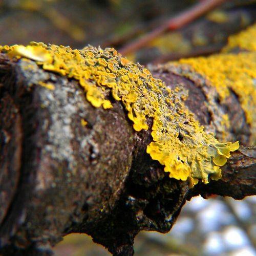 Close up AmptCommunity Amptcommunity_w1