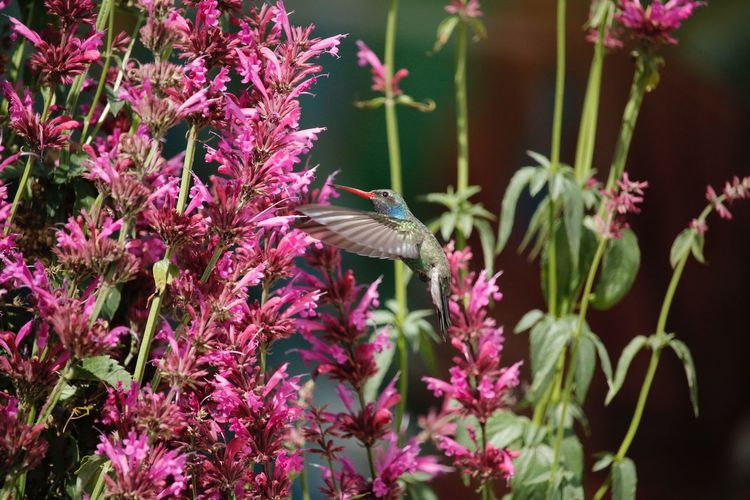 Bird Wings Flower Hummingbird