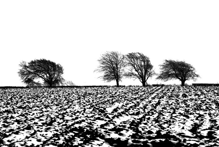 Beauty In Nature Clear Sky Day Landscape Line Of Trees Nature No People Outdoors Scenics Sky Snowy Field Stark Beauty Tranquil Scene Tranquility Tree Winter Cold