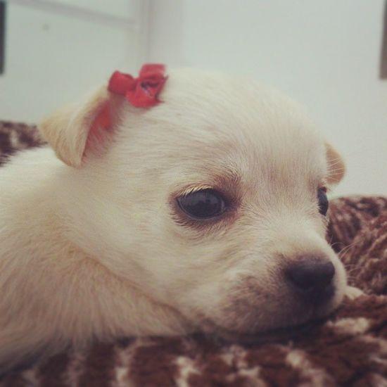 Antonella, sendo linda apenas! Pet Linda Gostosa Filhote