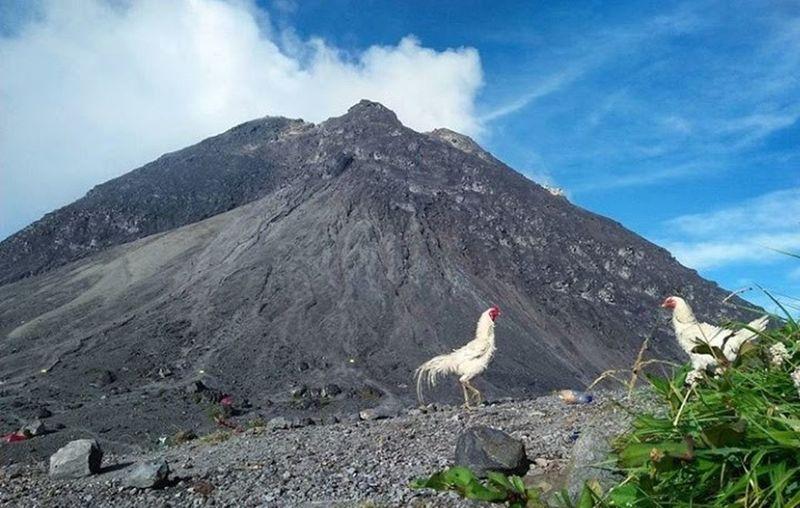 Mountain Animal