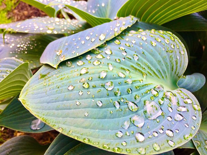 Leaf Plant Part Water Drop Plant Wet Beauty In Nature Green Color Nature No People