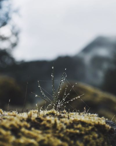 Close-up of wet grass on moss covered rock against sky