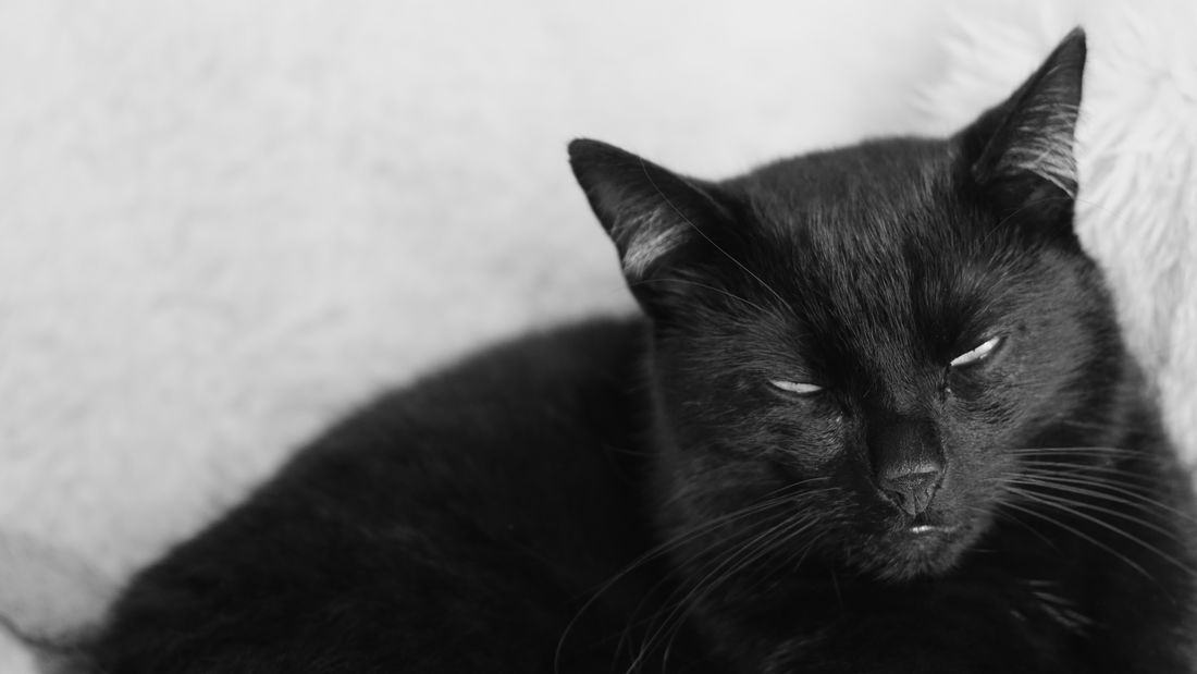 Indoors  No People Close-up Mammal Animal Themes Domestic Cat Pets Domestic Animals One Animal Crumb Cat Kitten Portrait Sony A6000 Sony Sonyalpha