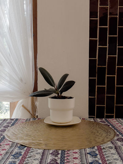 Close-up of potted plant on table against window