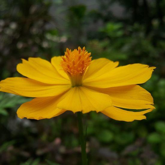 Flower Yellow Flower Yellow Beautiful Nature