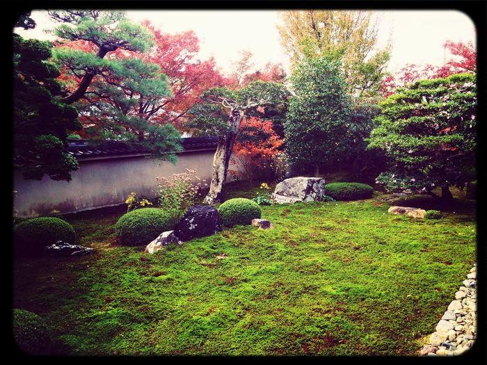 Garden Temple Japanese Style Moss