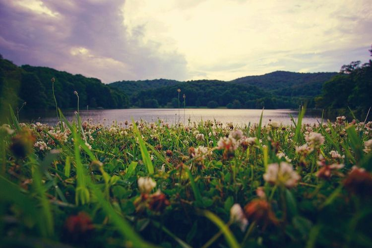 Probably Wont Be Selected For Market But Whatevs Mountains Lake Clover Plant Cloud - Sky Flower Beauty In Nature Growth Flowering Plant Sky Nature Tranquility Tranquil Scene Scenics - Nature Day Mountain Water Selective Focus Outdoors Freshness No People
