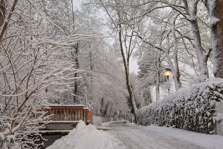 Snow covered plants and bare trees during winter