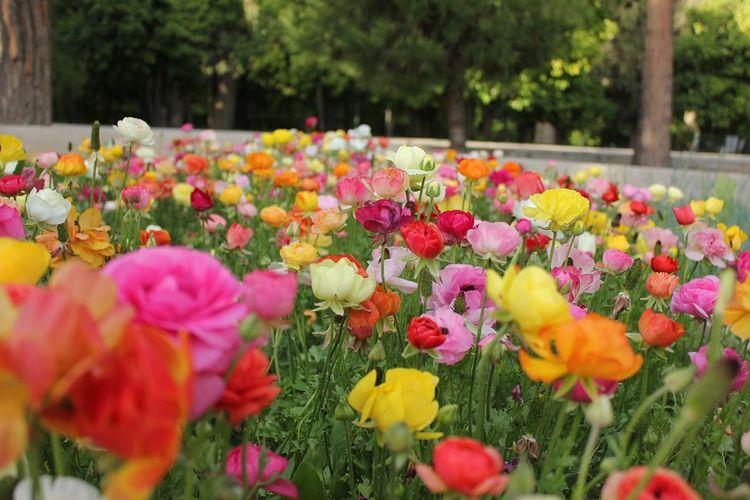 Flower Iran Shiraz, Iran Shiraz_city Eram Garden