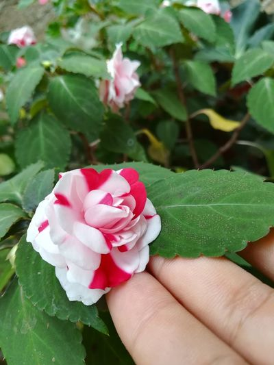 NotFilters Pink Color Plant Nature Beauty In Nature Fragility Flower Head Flower EyeEmNewHere Mix Yourself A Good Time