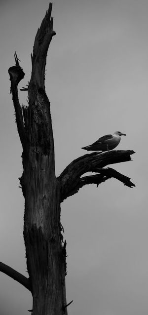Searching for a friend?😯 Showing Why I Could Be An Open Editor Hanging Out Beautiful Nature Black And White Blackandwhite Photography Traveling Trees Birds Animal Photography