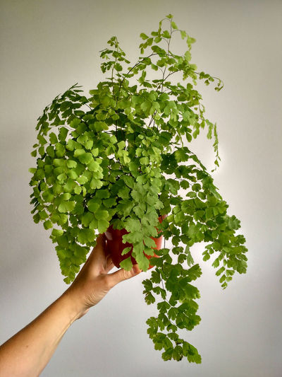 Midsection of woman holding plant