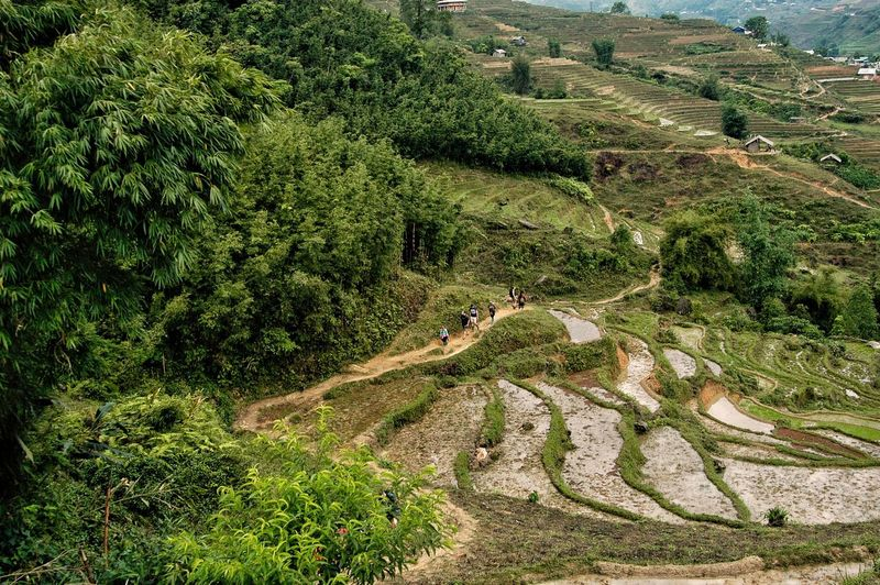 Vietnam SAPA Growth Plant Green Color High Angle View Land Field Beauty In Nature Tranquility Environment Day Nature Landscape Scenics - Nature Tree Agriculture Tranquil Scene No People Rural Scene Outdoors Sunlight