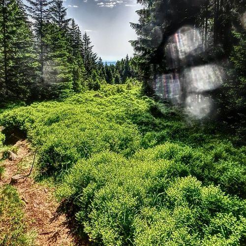 Sklblog Pfingsten Brockenlauf Harz