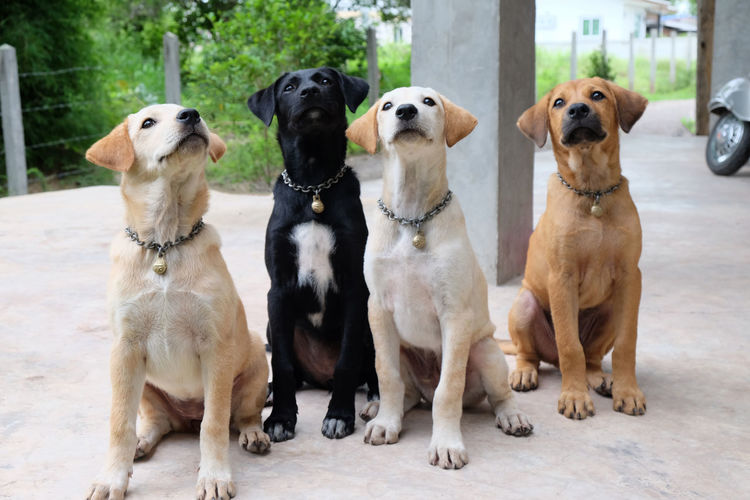 View of dogs looking up