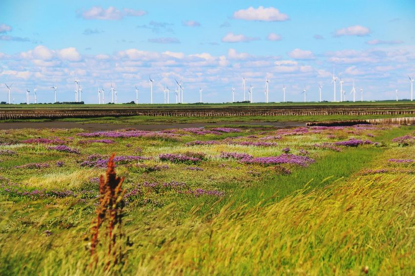 Strandflieder Windrad Pinwheel Energie Strom Energy Power Grassland Clouds And Sky Check This Out Taking Photos Fine Art Photography Enjoying Natural Beauty Flower Purple Flower