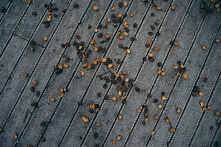 Autumn 28on35 Chestnut Backgrounds Close-up Day Floor Full Frame No People Outdoors Wood - Material