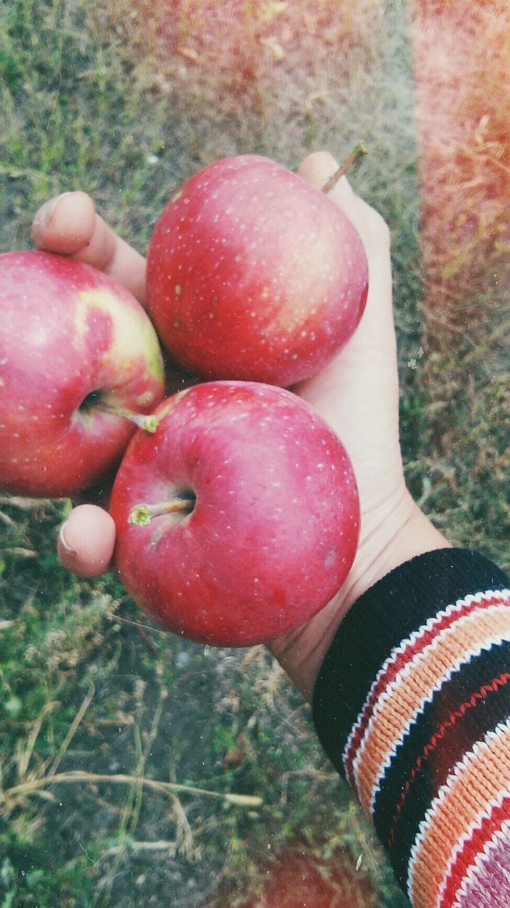 CLOSE-UP OF STRAWBERRY FRUIT