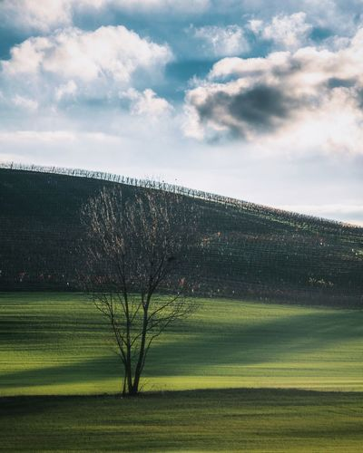 Tree Nature_collection Nature EyeEmNewHere EyeEm Best Shots EyeEm Nature Lover Sky Cloud - Sky Tranquil Scene Plant Tranquility Beauty In Nature Scenics - Nature Landscape Grass Environment Day Land No People Green Color Non-urban Scene Growth Outdoors Field Langhe