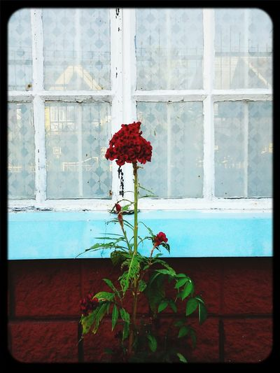 I Saw This Deep Red Flower. Taken With A Tablet. Nov. 17, 2014