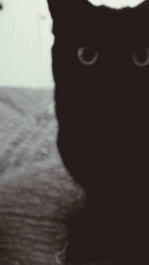 Cat Lovers Cat Eyes