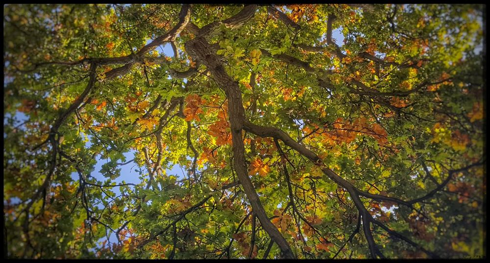 Ceiling Beauty In Nature Low Angle View Growth Nature Tree Beauty In Nature No People Green Color Tranquility Outdoors Day Branch Backgrounds Tranquil Scene Sky Close-up Lovely Day Falling Leaves Fall Fall Beauty Fall Foliage Fallbeauty