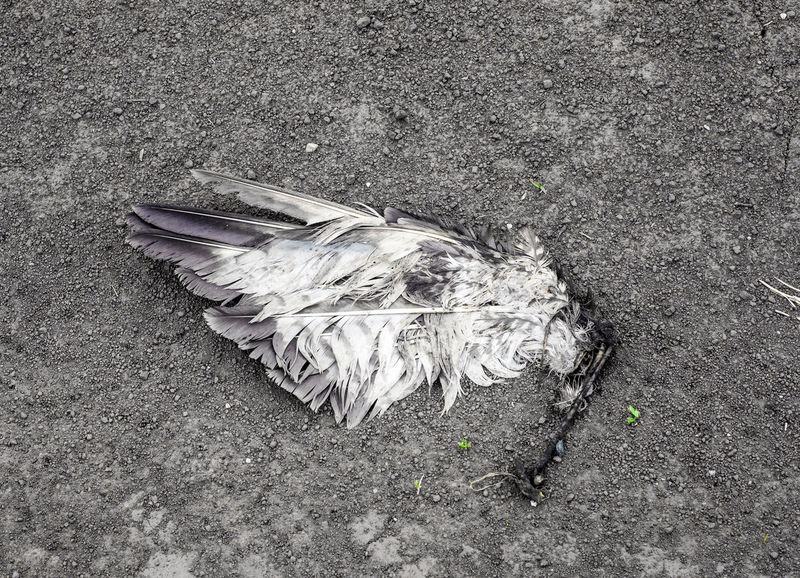 Broken wing Death Animal Animal Themes Animals In The Wild Bird City Day Directly Above Feather  Land Lying Down Nature No People One Animal Outdoors Street Vertebrate