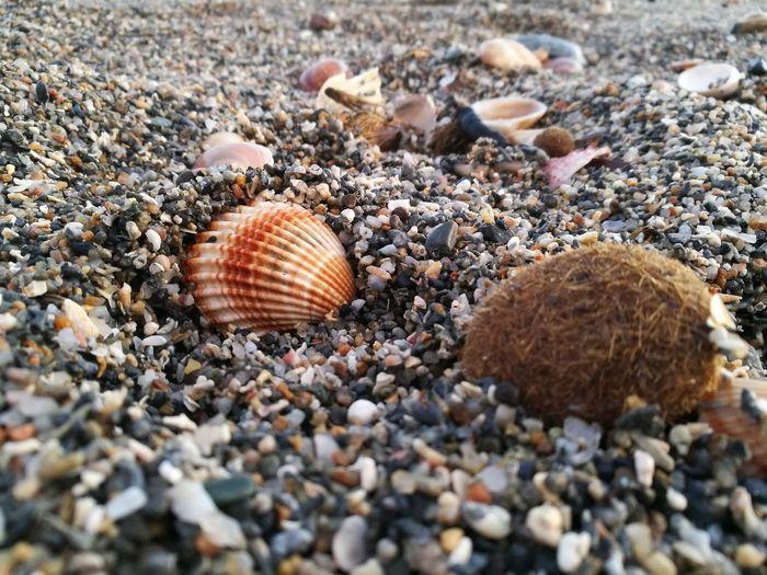 Close-up of seashells on pebbles at beach