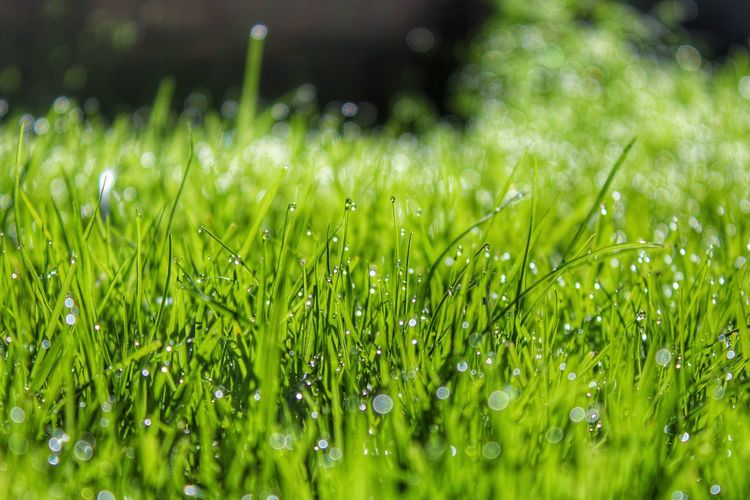 Grass Dew Dew Drops Dewdrops Dewdrops_Beauty Devon Blade Of Grass Green Nature Nature_collection Nature On Your Doorstep Nature Photography Naturelovers Low Angle View
