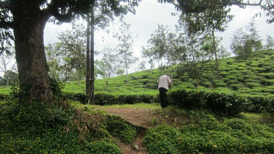 Tree Growth One Person Green Color Nature Adults Only Only Men Real People Outdoors People Day One Man Only Adult Beauty In Nature Scenics Men Sky Water kerala inquivisitive saveearth teaplantations tea plantation