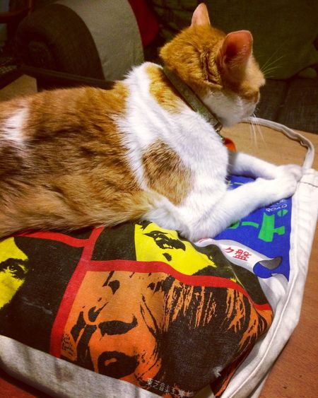 Pet Portraits Pets Domestic Cat Domestic Animals One Animal Mammal Animal Themes Indoors  Feline High Angle View Whisker No People Home Interior Day Close-up The Beatles Tote Bag John Lennon Paul Mccartney Ringo Starr George Harrison Cat♡ 💕