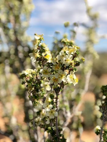 Plant Growth Flower Beauty In Nature Day Close-up Nature Sunlight White Color Freshness Green Color Focus On Foreground Flowering Plant Selective Focus Outdoors Tree No People Vulnerability  Fragility