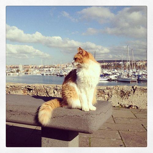This cat really really really likes posing for photographs Alghero Seaview Cat Gatti Sea Sardinia Cats Barche Harbor Gatto Boats Porto Bythesea Sunlight Littleballoffur Harbour Gorgeouscats Boat Sardegna Mare