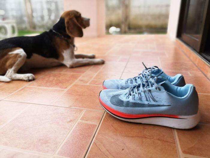 Pets Dog Sitting Tiled Floor Animal Themes