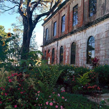 Baguiocity Diplomathotel Unfiltered Nature Photography Nexus5photography Garden Oldhotel Garden Photography