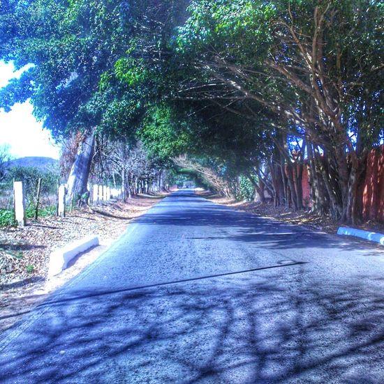 Túnel natural First Eyeem Photo
