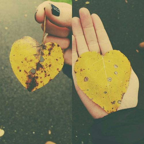 Fall Fall Leaves Fall Colors Yellow Leaves Yellow Heart Heart Leaves