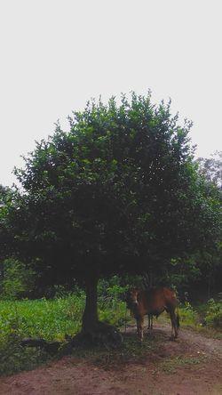 Tree No People Animal Themes Domestic Animals Comilla, Bangladesh