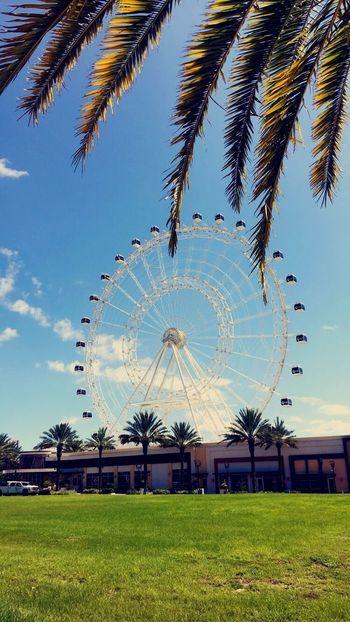 Orlando eye Growth Tree Day Amusement Park Outdoors No People Ferris Wheel Sky Building Exterior Architecture Palm Tree Nature Orlando Florida Orlandoeye
